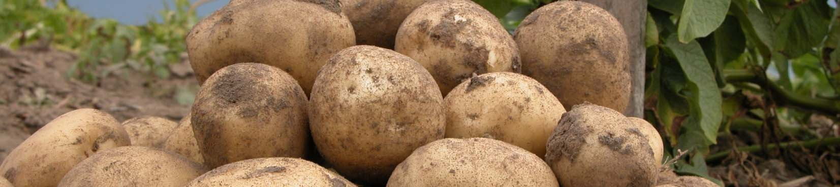 Growing Potatoes in Your Home Garden A Guide to Growing Potatoes In Your Home Garden Kelly A. Zarka, Donna C. Kells, David S. Douches and C.