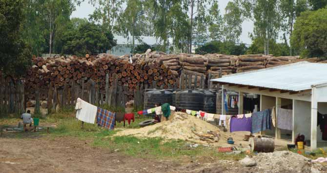 DESTRUCTIVE DISCREPANCIES Analysis of Sino-Mozambican timber trade data over the past six years shows a clear pattern of illegal logging and timber smuggling.
