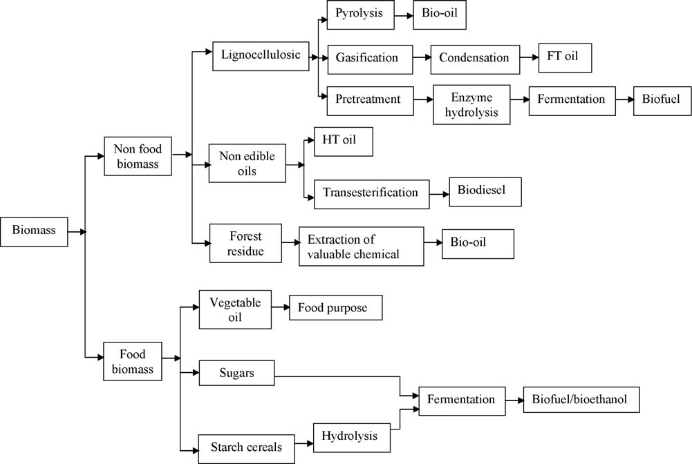 588 S.N. Naik et al. / Renewable and Sustainable Energy Reviews 14 (2010) 578 597 hydrolysis, sugars are extracted from lignocellulosic feedstock, after which the sugars are fermented into ethanol.