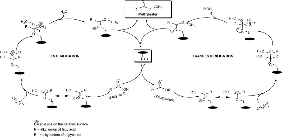 584 S.N. Naik et al. / Renewable and Sustainable Energy Reviews 14 (2010) 578 597 Scheme 1. Solid acid catalyzed simultaneous esterification and transesterification [23].