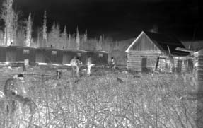 Camp construction at Fort Graham (Photo supplied by: Dez Rice) With the drop in fur prices the Bay had closed its trading post there in the late forties.