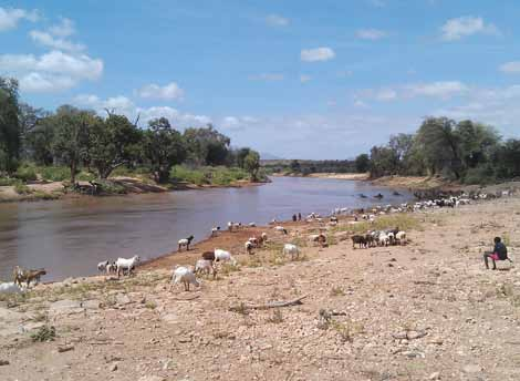 A livestock migration route on the bank of the Ewaso Ng iro in Samburu, Northern Kenya. The route on the right bank is more heavily grazed than the area off the route on the far side of the river.