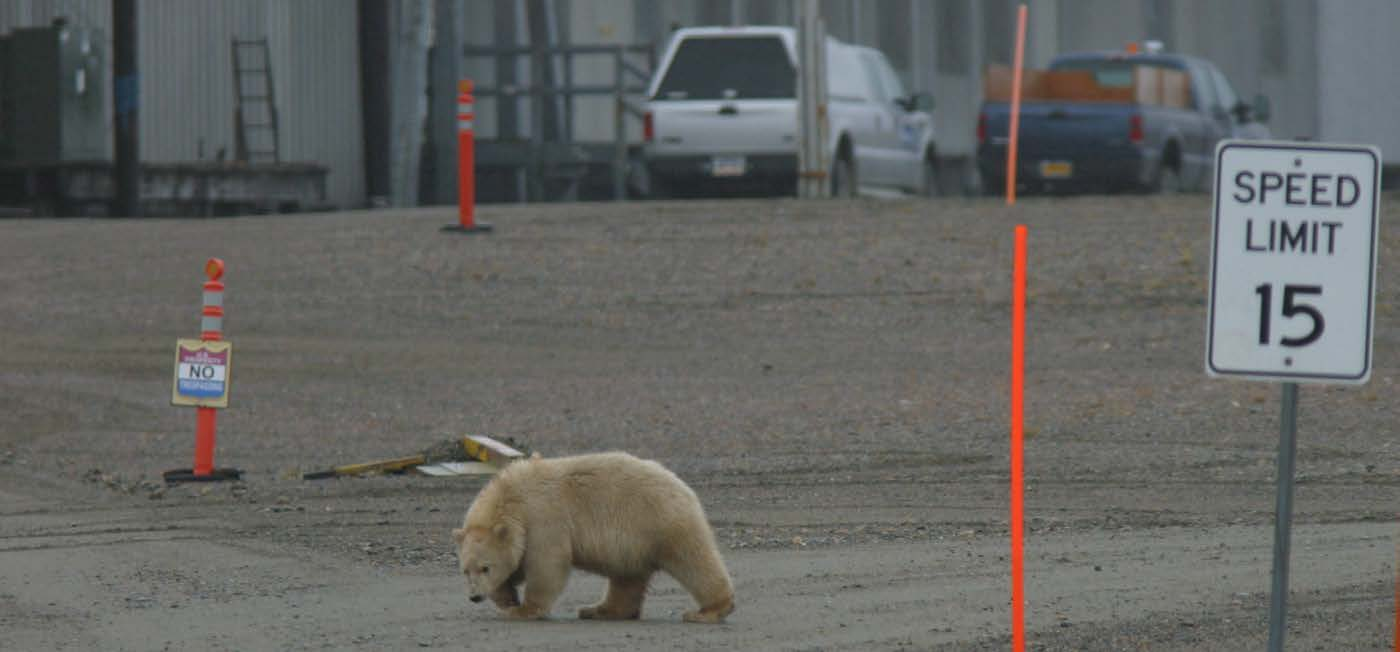 Conservation Management Strategy Agreement for management of polar bears in the Southern Beaufort Sea subpopulation and will welcome opportunities to engage with Canada under the 2008 Memorandum of