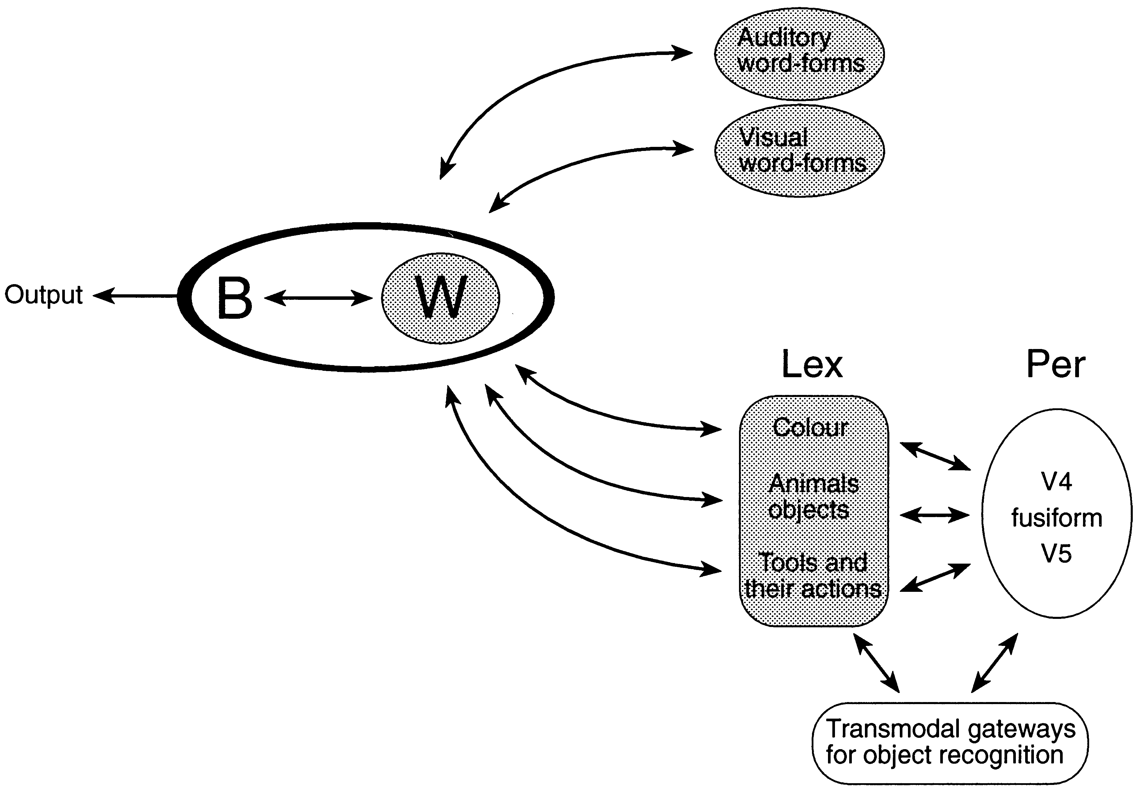 From sensation to cognition 1031 Fig. 4 A highly simplified schematic representation of some aspects of lexical retrieval and word comprehension. Arrows represent reciprocal neural connections.
