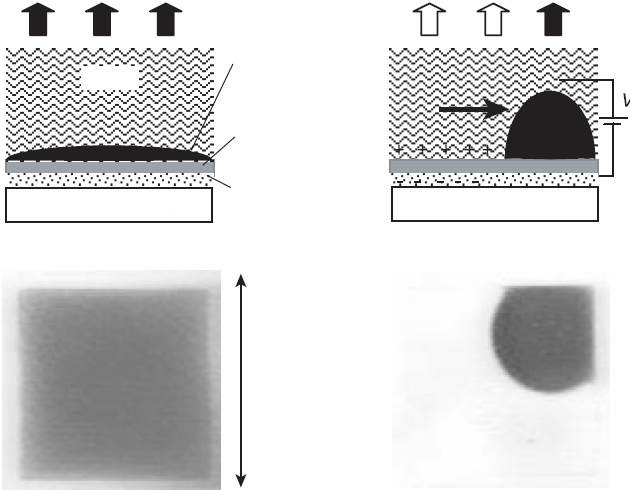 R740 Topical Review (a) (b) Water White substrate Coloured oil Hydrophobic insulator Transparent electrode V Homogeneous oil film Oil pushed aside 500 µm Figure 29. Electrowetting display principle.