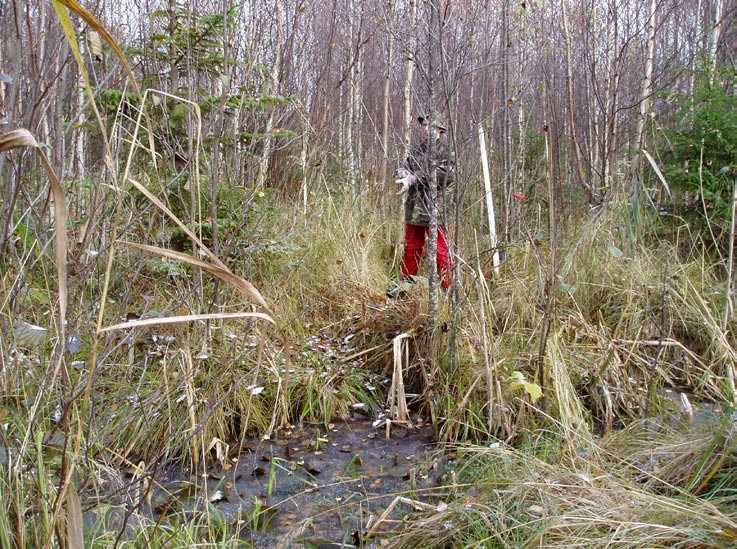 PROTOCOL FOR PEATLANDINVESTIGATION ADMINISTRATIVE INFORMATION Id nr: Name of peatland: TM 1 Stenrösmossen Map: X= Northing 6697257 Coring point Id: PFM004420 BP 7 50/H250 Y= Easting 1631209 Date of