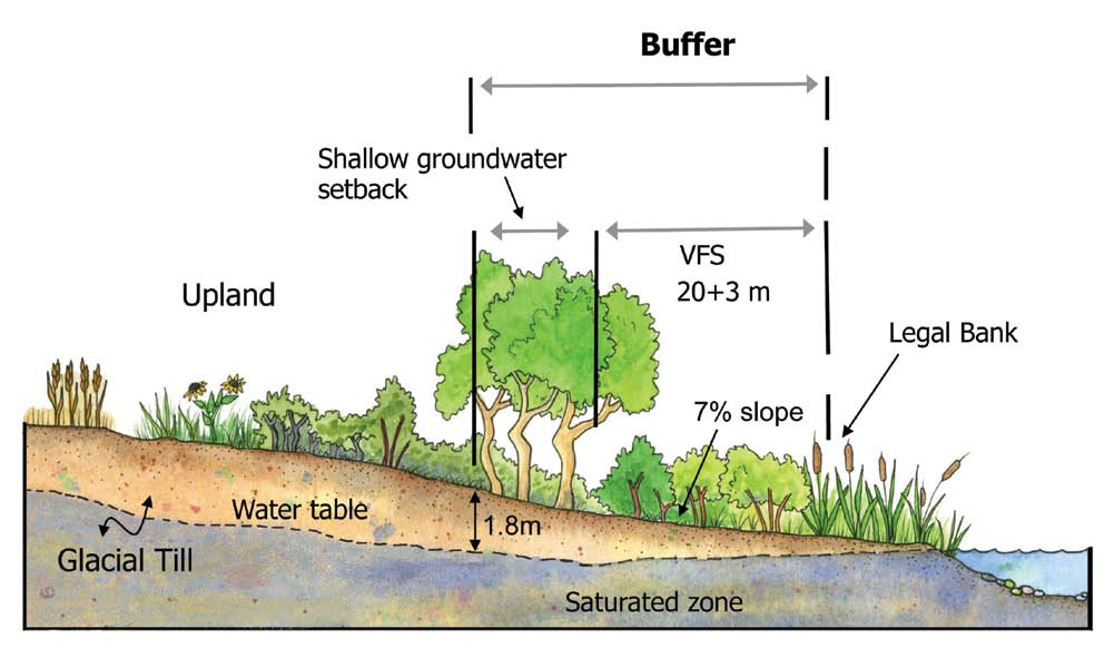 setbacks and buffers < Figure 3 A lake or wetland buffer on glacial till, comprised of a vegetated filter strip (VFS), and setback for shallow groundwater.