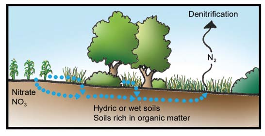 understanding riparian areas < restrict biotic removal.
