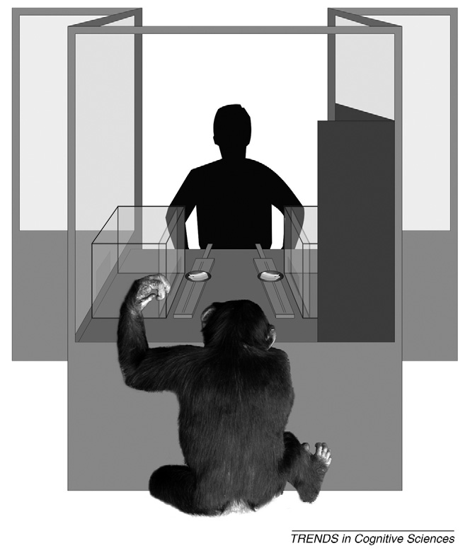 Box 1. Assessing visul nd uditory perspective tking in chimpnzees Hre et l. [26] hd chimpnzees compete for food with humn competitor who ws inside glss booth (see Figure I).