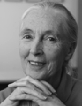 J a n e G o o d a l l Jane Goodall Founder of the Jane Goodall Institute. UN Messenger of Peace. Certainly. But first let me explain.