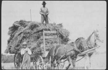 New families found it difficult to begin farming since, in contrast to the Chiefs' understanding, treaty terms for the provision of hoes was not extended to those families formed after treaty.