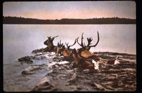 HUNTING RIGHTS -KIIOSE'WIN THE HISTORICAL RECORD Hunting - Kiiose'win animals for food and fur has been an important part of Anishinaabe life on the land since time immemorial.