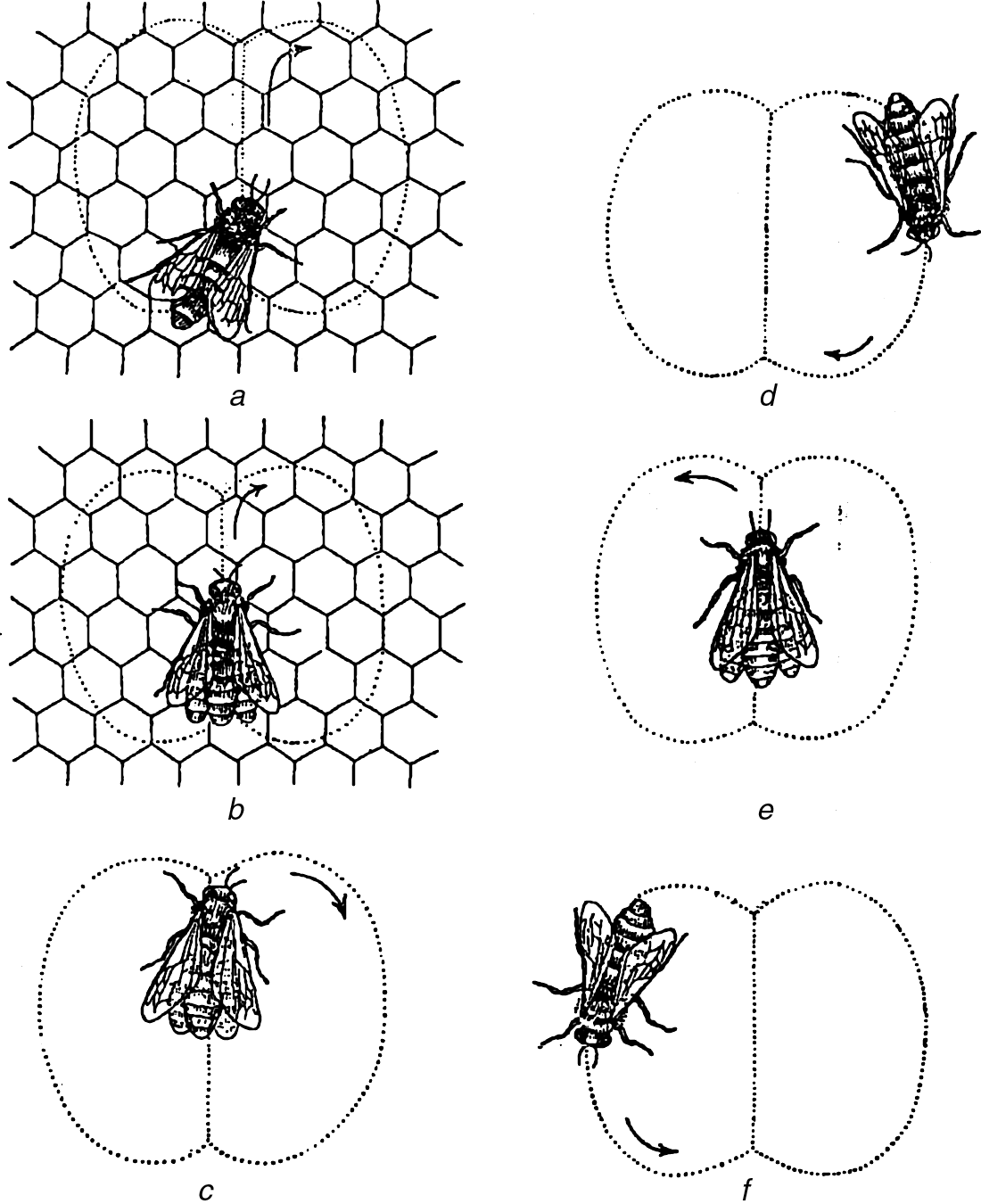 02-Saxton-3990-CH-02:Saxton-3990-CH-02 02/11/2009 3:44 PM Page 32 Figure 2.2 The wagging dance of the honey bee Source: von Frisch, K. (1954).
