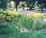 Add Plants to the Rain Garden: Choose native plants that won t require much watering, but make sure they can withstand wet soils for up to 24 hours. (Refer to the list of native plants below.