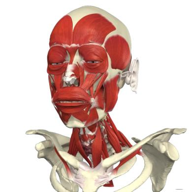 P a g e 2 Human Anatomy: Regional Edition Human Anatomy: Regional Edition total 257 individual 3D views, with 67,541 images 33 cross-sectional 3D views, with 4,244 images 7,457 text articles 1,118