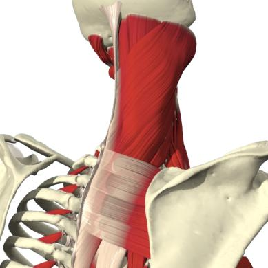 149 animations/movies Interactive Spine: Clinical Edition 18 individual 3D views, with 4,068 images 9 cross-sectional 3D views, with 693