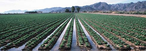 Flood Irrigation The oldest form of irrigation, floor irrigation, is the application of water by gravity flow to the surface of the field.