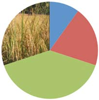 The International Food Policy Research Institute calculates a 12-14% decline in world rice production by 2050 due to the effects climate change (Nelson et al. 2009).