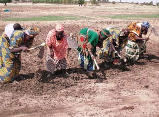 Maya Abdoulaye (bottom right) shown here in her second season using SRI practices. Women in Findoukaina Take to SRI In the north of Mali, rice is considered a man s crop.