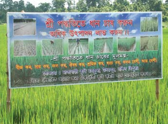 Despite significant and steady intensification of fertilizer and pesticide use on farmers fields, national yields and production of irrigated rice have not altered much since the 1990s and even