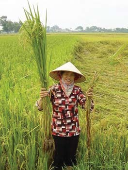 FOREWORD Rice is not only the major source of calories for half the world s population, it is the single largest source of employment and income for rural people.