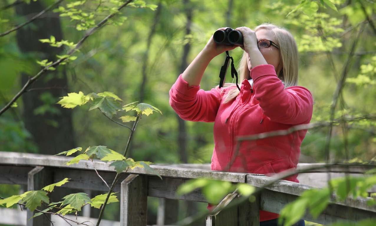 Bird watching in Rondeau Provincial Park, Ontario E.