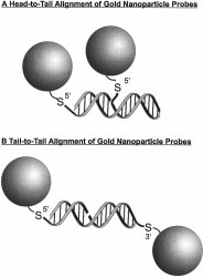 J. Am. Chem. Soc. 1998, 120, 1959-1964 1959 One-Pot Colorimetric Differentiation of Polynucleotides with Single Base Imperfections Using Gold Nanoparticle Probes James J.