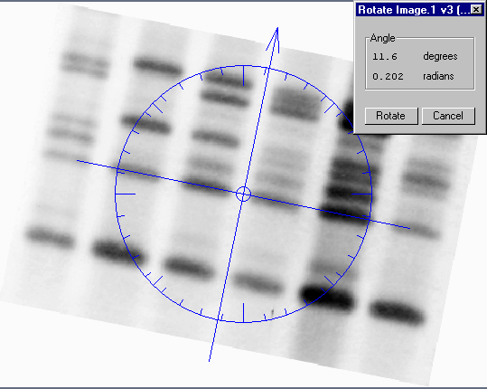 Viewing and Editing Images Fig. 12-17. Custom rotation; the arrow points in the direction of the new top of the image. To perform the rotation, position your cursor on the arrowhead and drag.