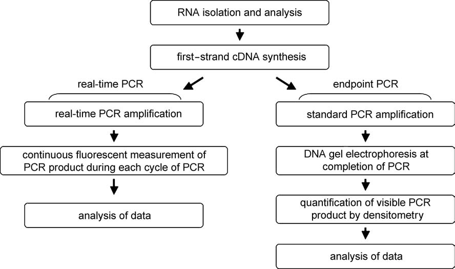 able to generate DNA copies of RNA templates (Temin, 1974, 1995).
