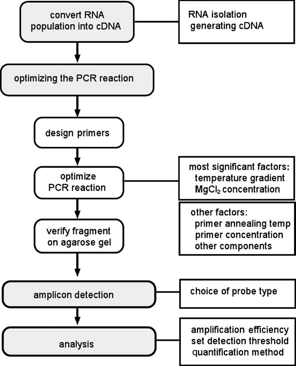 Figure.3.5 Flow chart of a real-time PCR experiment. The first step is to determine how to optimally isolate RNA and create the cdna.