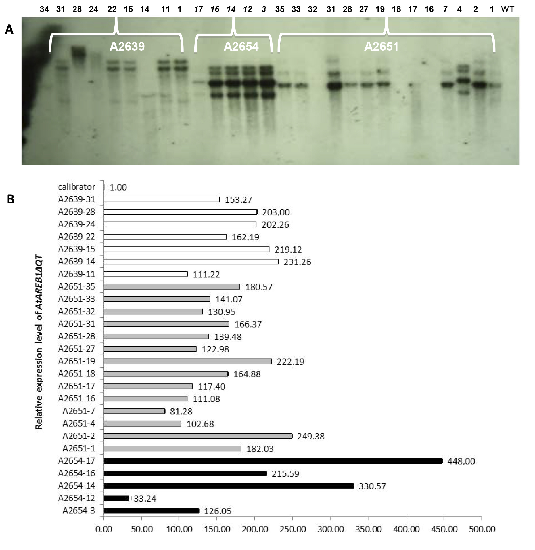 J.P. Leite et al. 6280 lines that were selected for phenotypic and physiological studies (A2639.14, A2651.2, and A2654.14). The expression of the transgene in the low-copy lines A2651.2 and A2639.