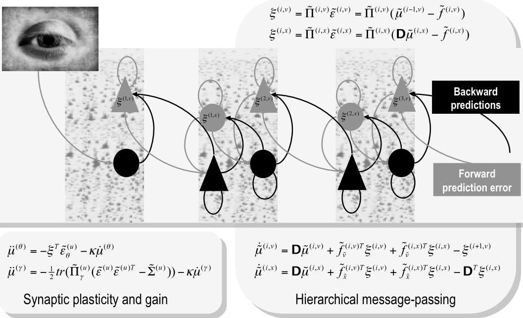 K. Friston Fig. 3: Hierarchical message-passing in the brain.