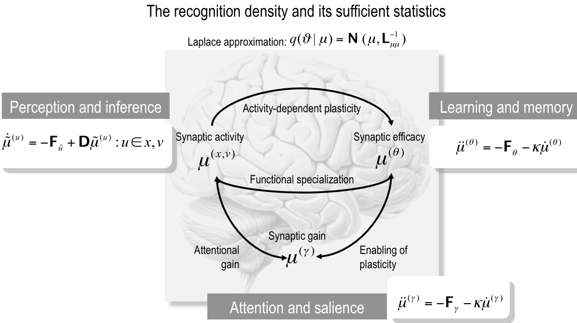 Embodied Inference: or I think therefore I am, if I am what I think Fig. 7: The recognition density and its sufficient statistics.