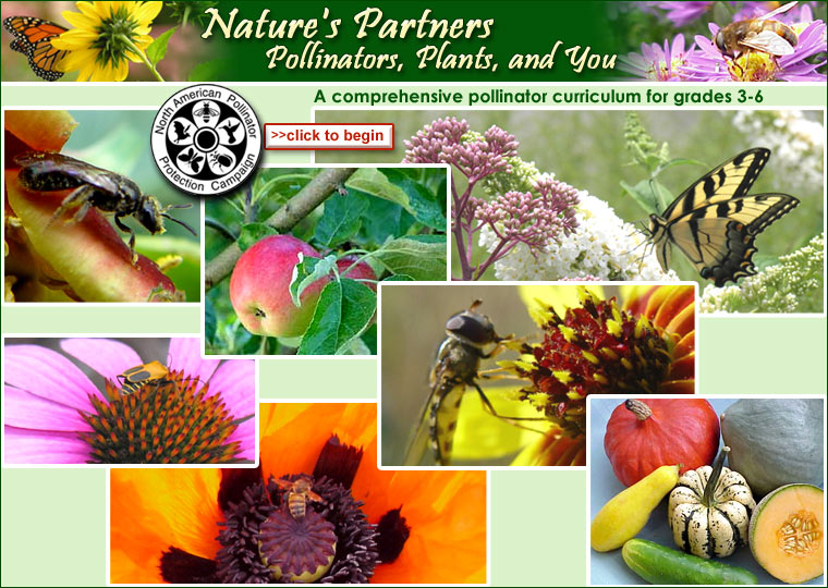 >>next Nature's Partners: Pollinators, Plants, and You Copyright 2007 The Pollinator Partnership Please help us improve and expand this resource!