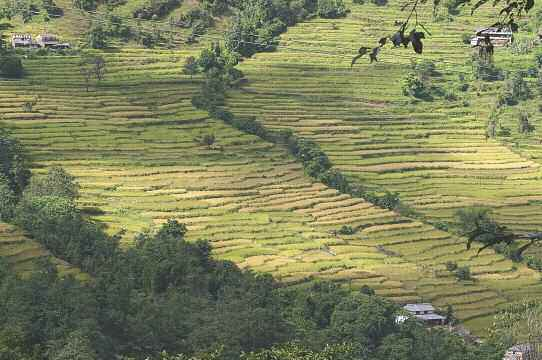 Carbon-Rich Farming Sajal Sthapit In Nepal, terraces for rice cultivation help prevent erosion.