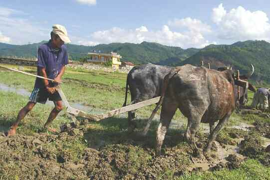 Co-Benefits: Distraction or Opportunity? Sajal Sthapit A farmer plows his field to plant rice, Pokhara, Nepal.