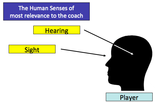How do humans connect with the world? We use our 5 senses: touch, taste, smell, sight and hearing.