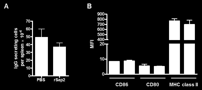 Similarly, BALB/c mice that received 250 µg of rsap2 i.p. showed no significant increase in the number of splenic immunoglobulin-secreting cells when compared with control animals (Figure 2A).