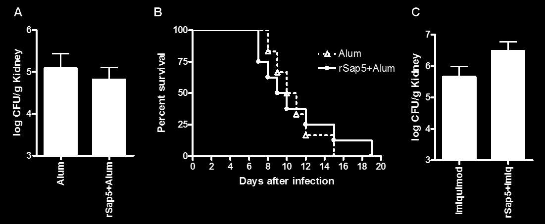 immunized with rsap5 plus either adjuvant and controls, 7 days upon C. albicans infection (Figure 6A).