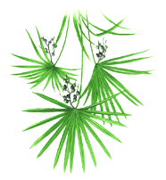SAW PALMETTO Saw Palmetto is widely used for benign prostatic hypertrophy (BPH) symptoms in Europe, both as monotherapy, and in combination products.