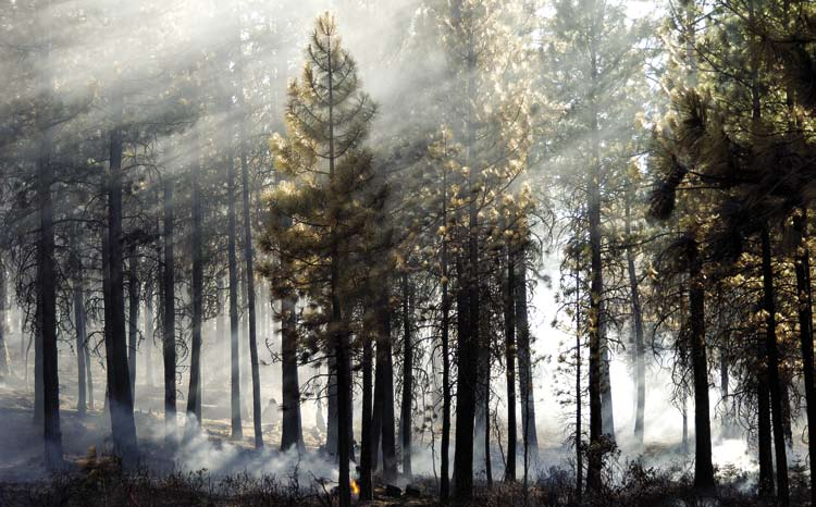 Pacific Northwest Research Station MANAGING FORESTS AFTER FIRE Tom Iraci I N S U M M A R Y Fire is a part of the forest ecosystem, and its effects have been well documented in the scientific