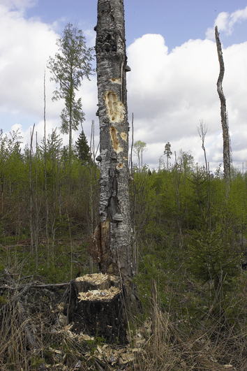 Picture 6 (up left). The natural characteristics of habitats of special importance, such as this spring, which must be preserved during silvicultural works and wood cuttings.
