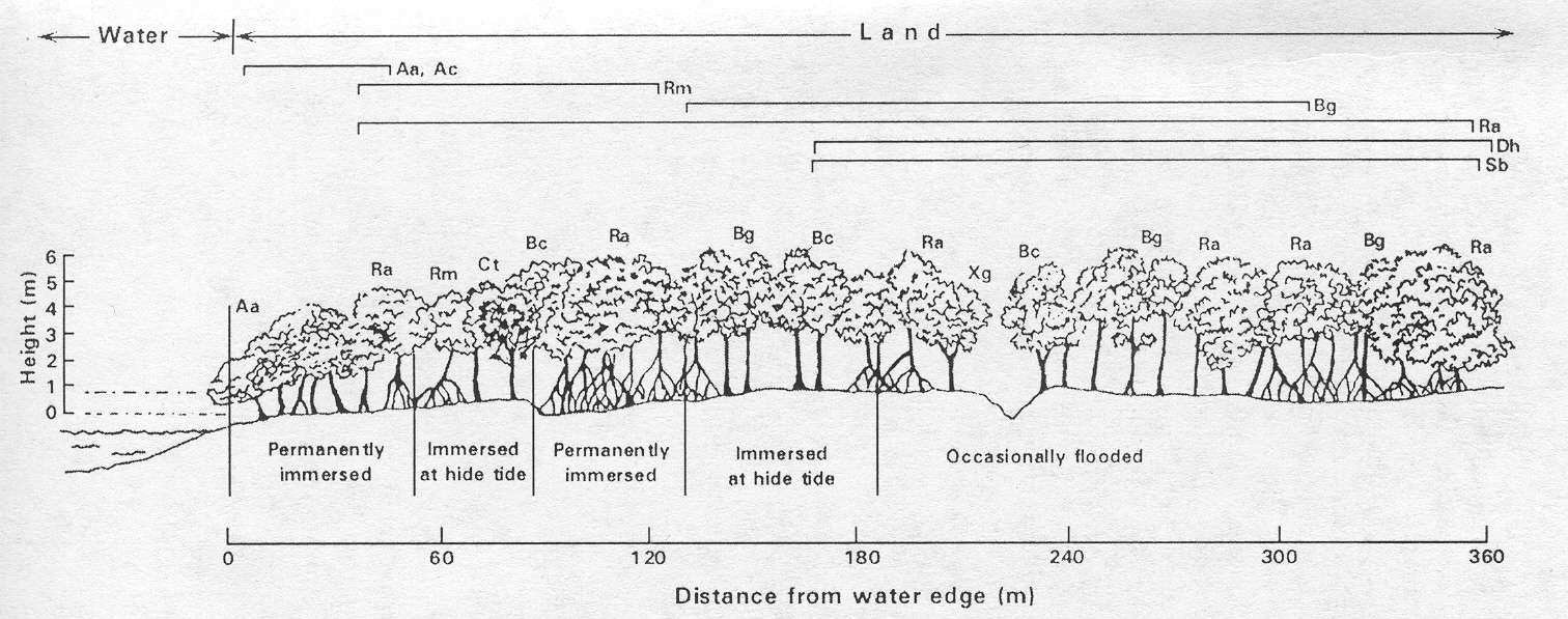 PART 1: THE MANGROVE HABITAT FIGURE 4A Example of mangrove zonaion in Cilacap, souh coas of Java, Indonesia Adaped from (Whie e al., 1989).