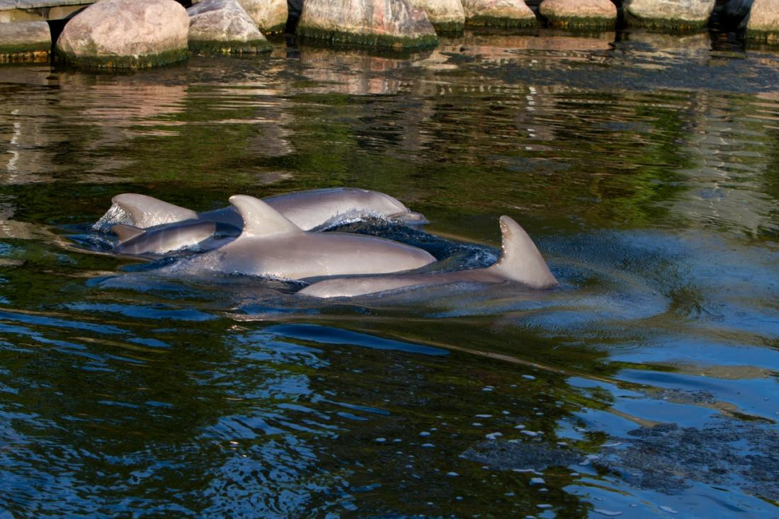 Dolphins live longer under human care than in the wild 1. Median life spans under human care increase 2.