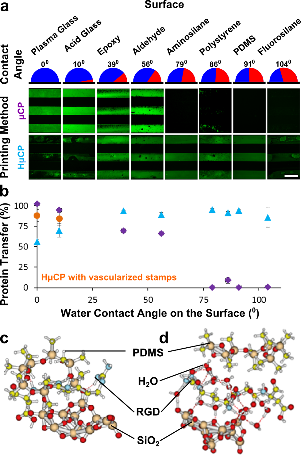 Langmuir Figure 2. Patterning of proteins on different surfaces with varying wettability by μcp and HμCP and models of RGD adhesion in dry and wet state between SiO2 and PDMS.