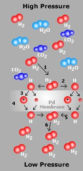 Palladium membranes for selectivity improvement in dehydrogenation and hydrogenation reactions: only hydrogen could permeate through the Pd
