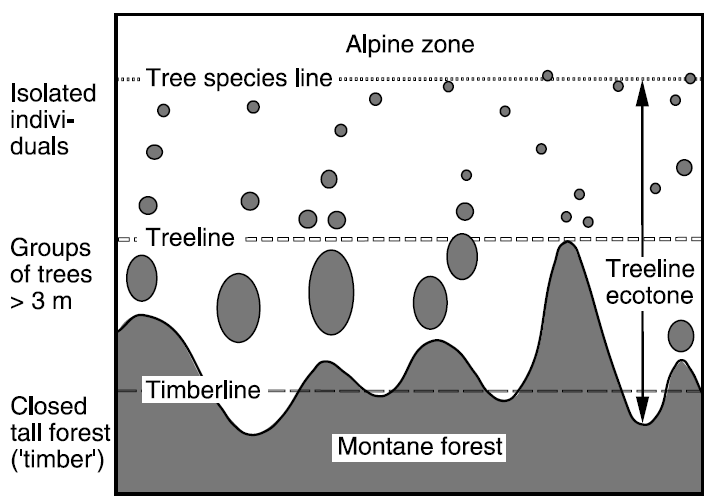 6 The influence of climatic and anthropic factors on mountain pine ecotone vegetation.