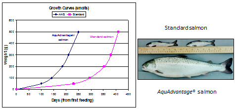 Figure 10. Superior growth rate in AquAdvantage salmon. If approved by the U.S. FDA, AquAdvantage Salmon will have a very specific regulatory definition and strictly imposed conditions of use.