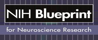 Federal funds from the Blueprint for Neuroscience Research and the Office of Behavioral and Social Sciences Research, National