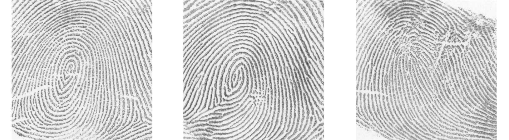 Figure 6.3: Representation of minutiae observed on fingerprints. Figure 6.4: Representation of wrinkles, creases and warts observed on fingerprints.